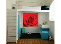 Rosa Em Close - Arvores E Florais